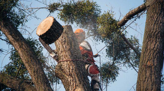 Удаление деревьев, пней и обрезка деревьев
