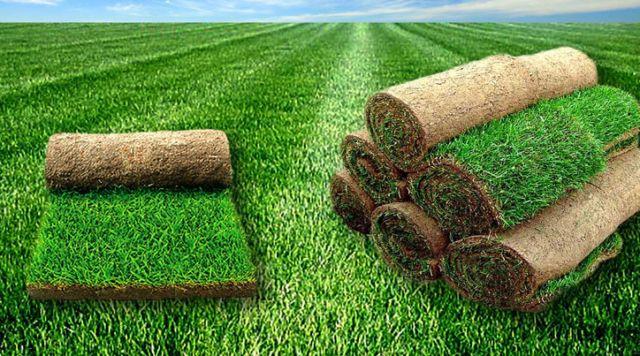 Ассортимент и цены на рулонный газон