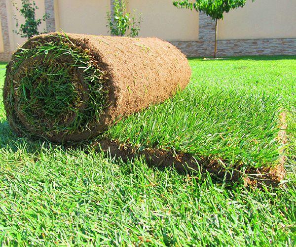 Элитный газон